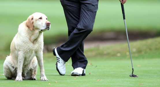 Dog with golfer
