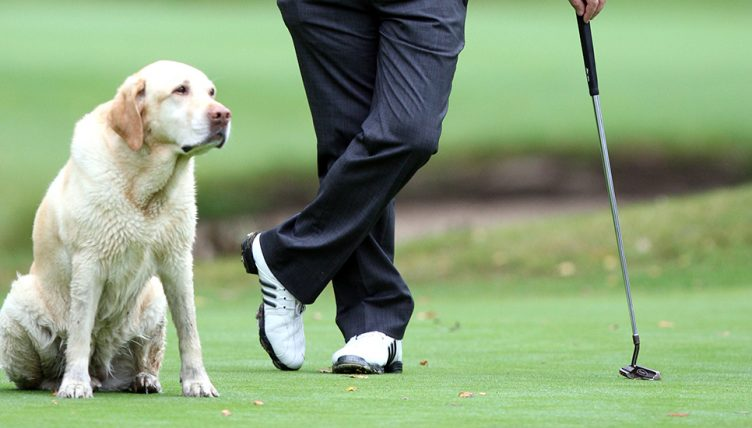 Dog with golfer